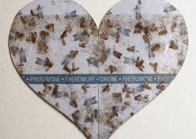 Amour et Phéromones